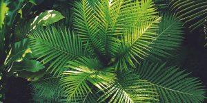 green fern tree